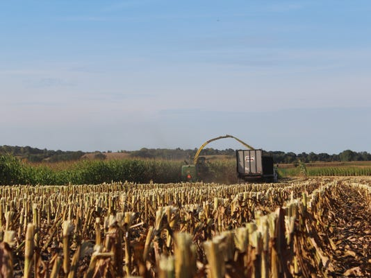 RRL-Chopping-Corn-for-Silage-2.JPG