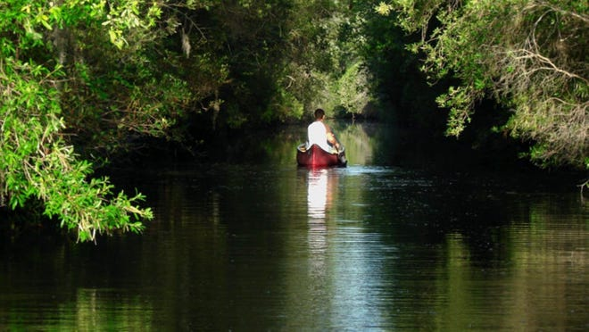 A paddle at the Okefenokee National Wildlife Refuge.