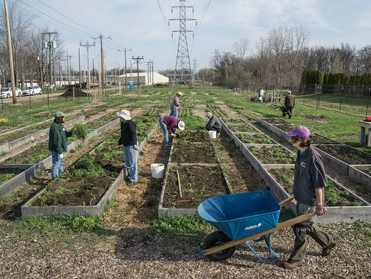 Gardeners at the Gleaners Garden clear beds of winter
