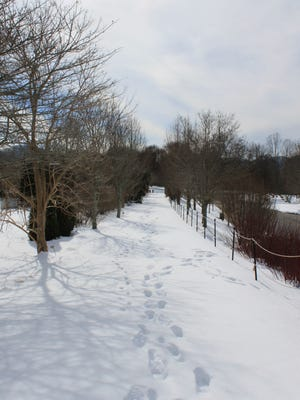 The N.C. Arboretum, seen here covered in snow, is closed on Tuesday, Feb. 17.