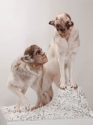 In Kate Clark: Mysterious Presence, Clark uses the centuries-old technique of taxidermy to sculpt human-like facial features with wild animals' hides.