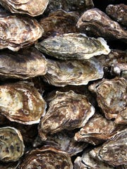 Oysters secrete their shells, which consist almost entirely of calcium carbonate.