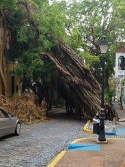 A tree taken down by hurricane winds blocks a road