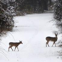 Wisconsin's antlerless deer hunt runs Dec. 8-11