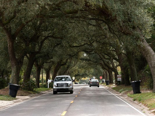 12th Ave. Tree Tunnel