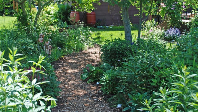 Manage weeds by using woodchips and shredded bark to mulch pathways and garden beds.