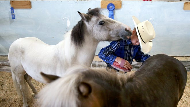 Bella nuzzles CJ Halfhill, 8, of Port Orchard, as he tries to brush Colonel at the Kitsap County Fair and Stampede. CJ was one of many first-time competitors at the Kitsap County Fair on Wednesday, the opening day. The fair continues Thursday through Saturday.