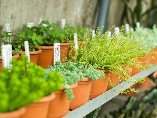 Market for sale plants. Many plants in pots