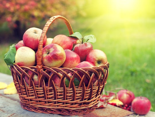 If you want the freshest apples, go apple picking!