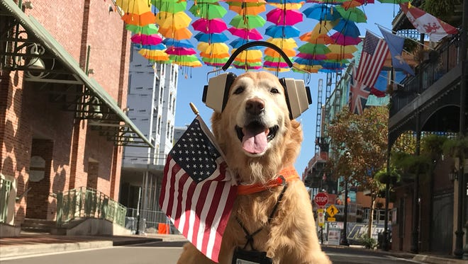 Sadie the Aviation Dog, who greets travelers at the Innisfree Jet Center in Pensacola, posed for a selfie in downtown Pensacola on Monday morning.