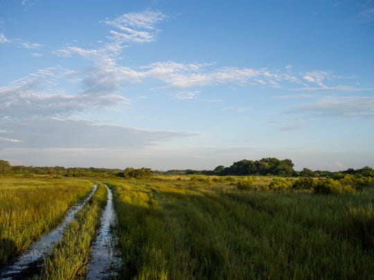 Nearly 10,000 acres of the Half Circle L Ranch east of Immokalee, seen on Friday, Aug.18, 2017, has been offered for sale to Conservation Collier.
