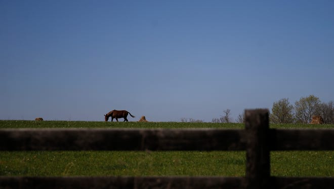 """A horse grazes in a field along Laurel Ridge Road, Saturday, April 23, 2016, in Piketon, Ohio. State and local officials are conducting investigations throughout the Ohio town. State and local officials are conducting investigations throughout the county in the aftermath of an """"execution-style"""" killing that left eight dead."""
