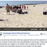 This video on Assateague Island National Seashore's Facebook page shows a lifeguard being kicked by a horse.