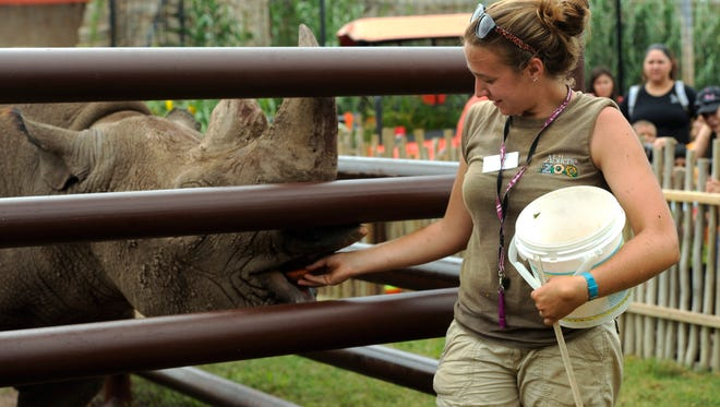 Animal keeper Jessica Scherry feeds Macho, a black rhinoceros, a treat as Scherry gives a zookeeper talk about black rhinos during the 50th anniversary celebration on Saturday, July 9, 2016, at the Abilene Zoo.