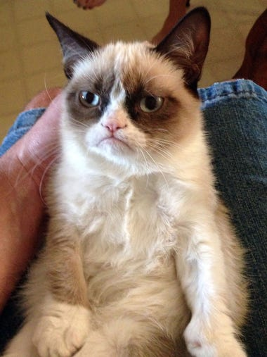 Grumpy Cat, photographed by Bryan Bundesen of Galion,