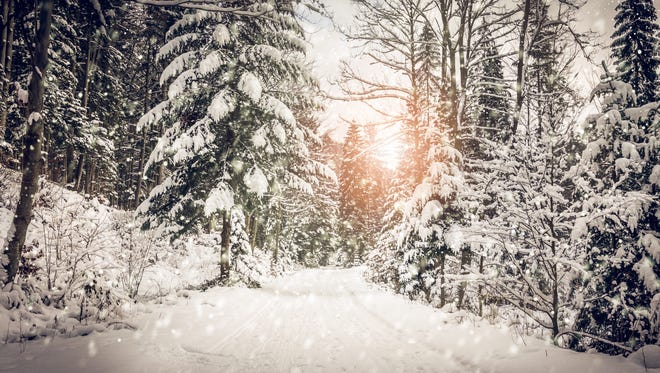 Winter landscape. Road covered in snow in dense forest.