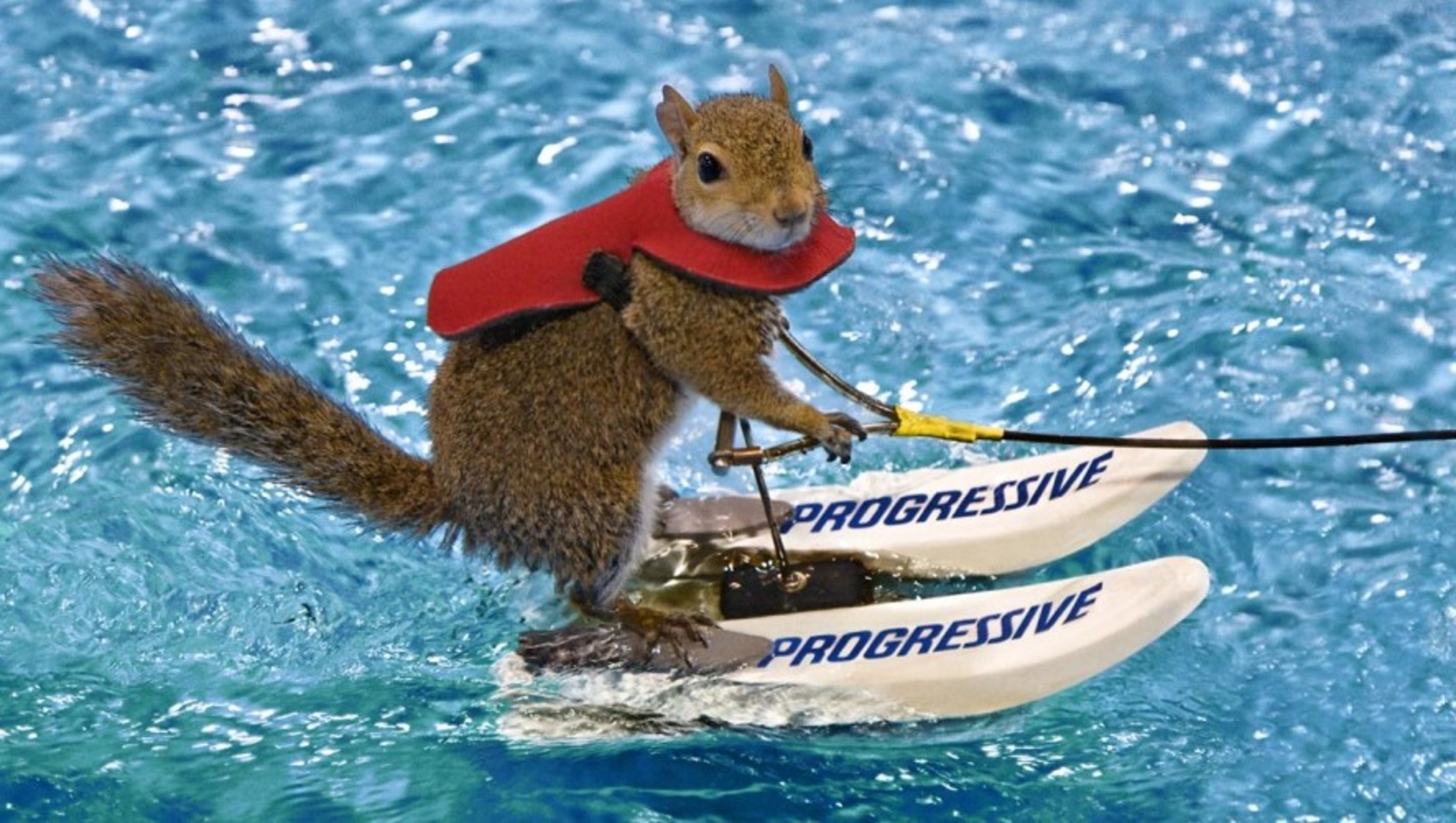 World Famous Skiing Squirrel Heading to Louisville