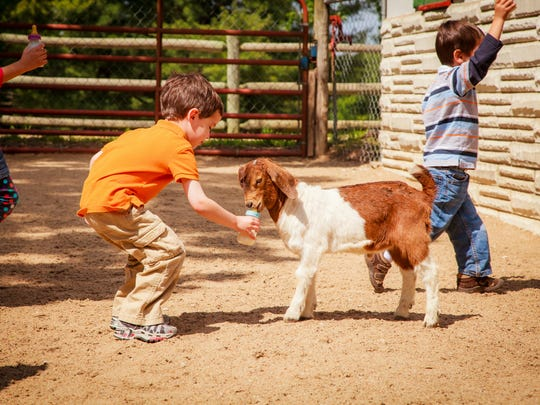 Children feed goats at Grant's Farm in St. Louis.