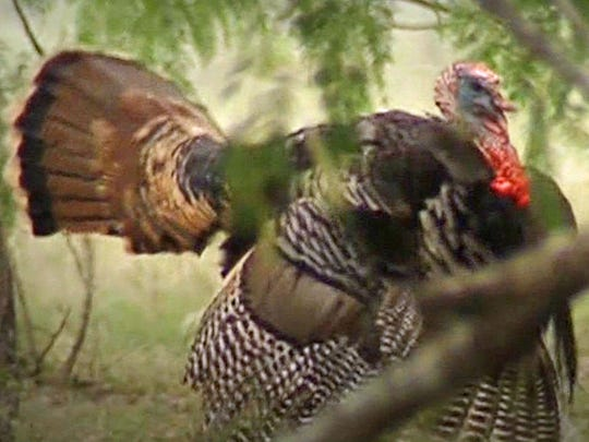 The town was originally called Turkey Roost for the wild turkeys found on the nearby Turkey Creek before being shortened to just Turkey in 1893.