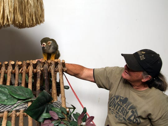 Kristi Ingram introduces Pip, a squirrel monkey, to the decoration inside the Monterey Zoo's education center.
