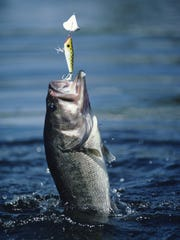Lake Winnebago is home to largemouth bass (pictured) and smallmouth bass.