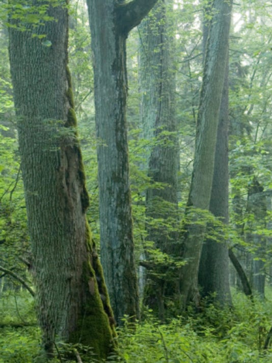 ash forest.jpg