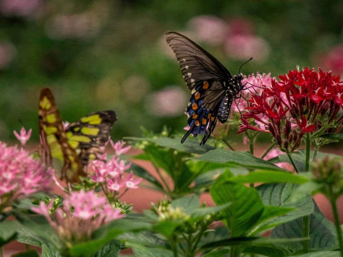 If you haven't been to the Butterfly House in Navarre,