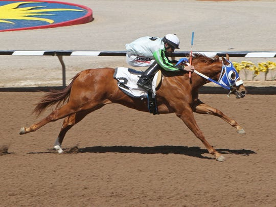 Suze Returns, who is owned by El Paso's Joe Rios, will compete in the Rainbow Derby trials in Ruidoso on Sunday.