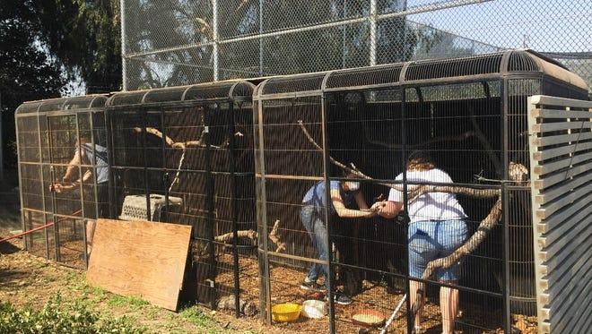 In masks, people evacuated the Santa Barbara Wildlife Care Network's Goleta-based center.