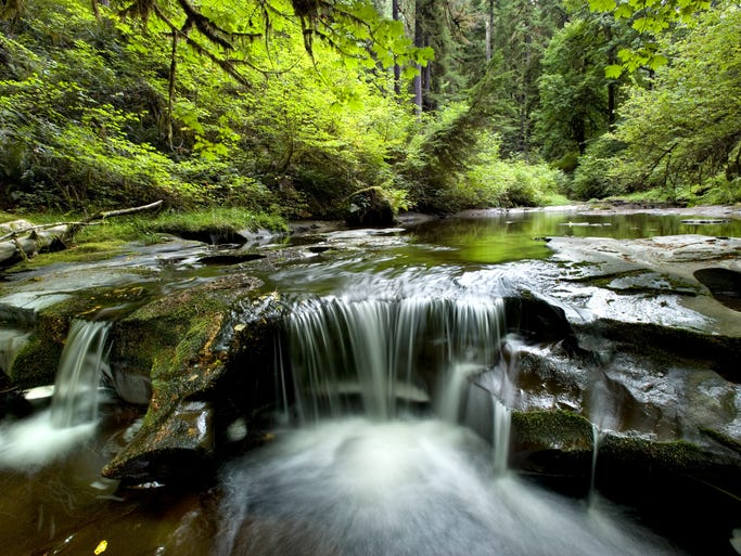 Wassen Creek flows through dense old-growth forest in a remote canyon in Oregon's Central Coast Range east of Reedsport.