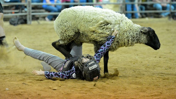 A rider hits the ground with her flip-flops coming off after falling off the sheep she was riding as part of mutton busting during a rodeo at Old Grey Mare's Acres Arena near Raphine in April 2014.
