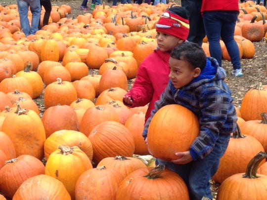 Javanni Fennell, 4, of Brighton, at right, picks out a pumpkin at Powers Farm Market in Perinton on October 24, 2015.