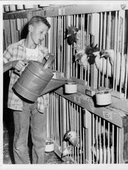 Jerry Laraby sees to it prize chickens get a drink