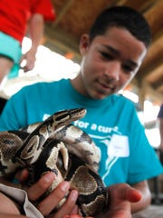 Trenton Colon, 12, holds a ball python while getting an up close look at wildlife at Camp Sandcastle, a day camp for children with type 1 diabetes and their siblings at Camp Aranzazu in Rockport on Thursday, July 10, 2014. Children attending the camp participate in a variety of activities while also learning positive diabetes management.