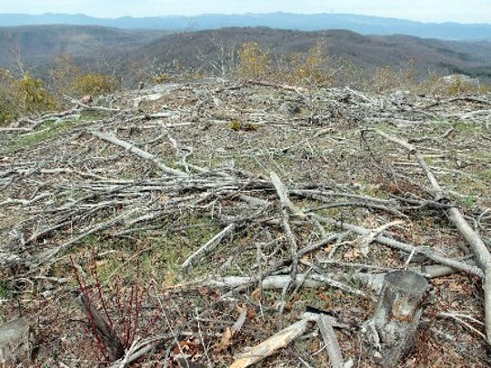 Several trees and other vegetation had been cleared from the top of Sassafras Mountain in 2015 to improve the view.