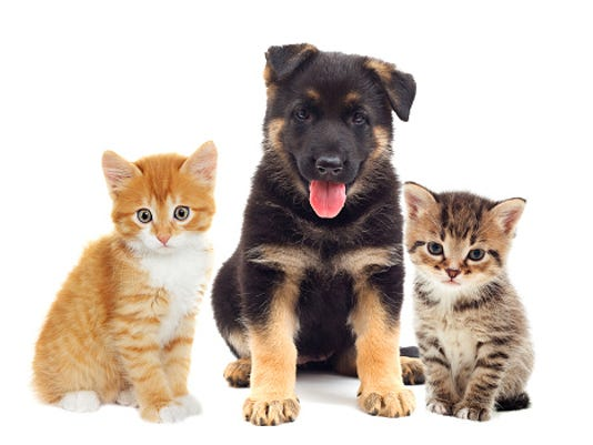 STOCKIMAGE-Cats&Dogs