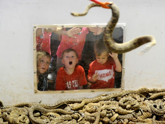 Kids watch as snakes are moved around the pit during