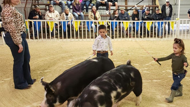 The next generation of FFA practice showing pigs at the Lone Grove Local Agricultural Show Saturday night. Though not official contestants, the peewee showmanship category was a crowd favorite.