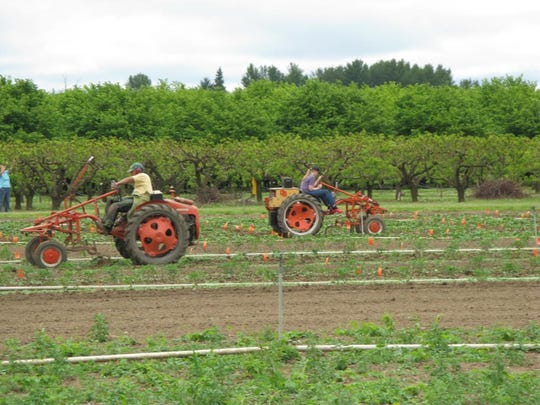 Oregon State University's vegetable research farm.