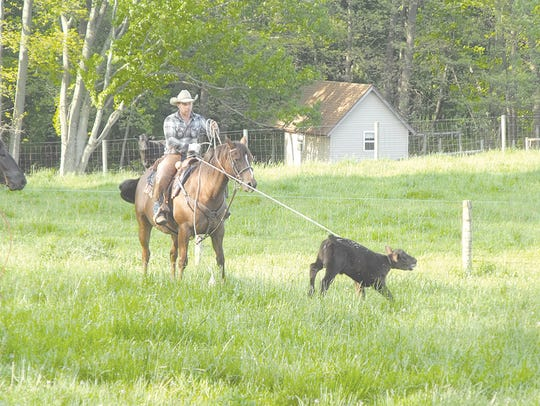 Harley Hostetler catches one of the calves during the