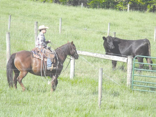 Harley Hostetler watches as the cows are being moved to another pasture area.