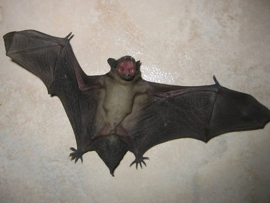 HES-SUB-101916-Bat.jpg