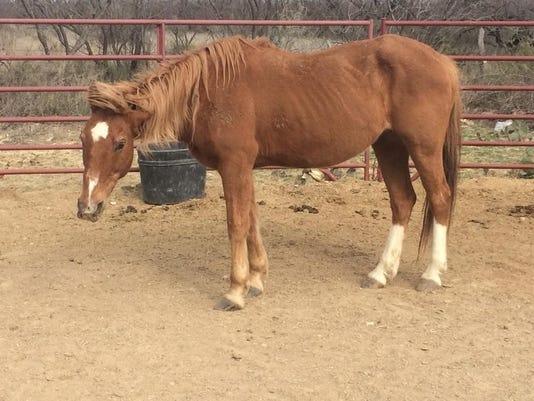 636184600486278025-horses2.jpg