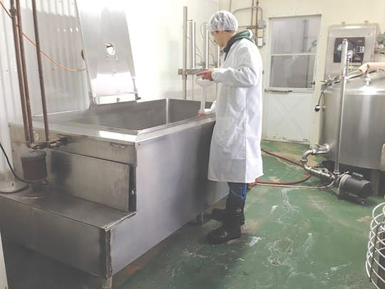 One of the boys at work on cheesemaking day. Larry