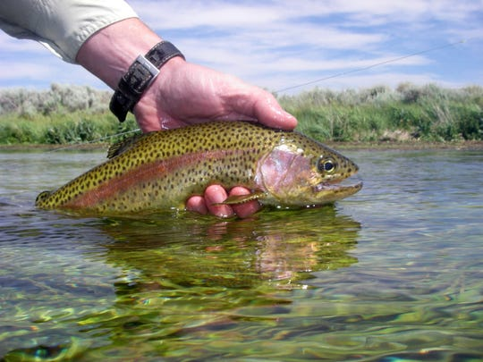 Photo by Roger Bloom, Heritage and Wild Trout Program.