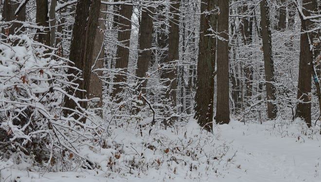 Even if the snow falls heavily, it doesn't mean you have to get lost in the woods.