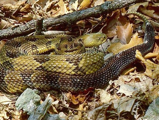 636607724253276105-snake.jpg
