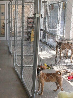 Property left behind, such as dog crates and a truck, at the now-closed Safe Haven Animal Shelter.