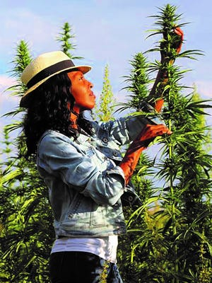 """The film """"Mary Janes: Women of Weed"""" will feature a meet-and-greet with producer-director Windy Borman Saturday at the Palm Springs Cannabis Festival. The movie festivities start at 5:30 5 p.m."""