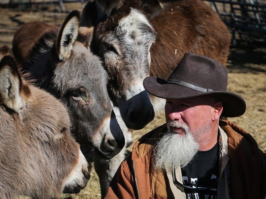 Miniature donkeys surround Mark Meyers as he sits down